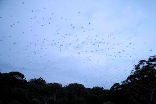 Bats878m